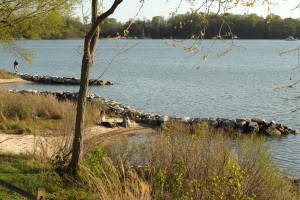 Shoreline at Camp Letts.